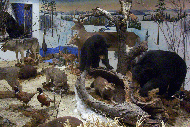 Wildlife Diorama